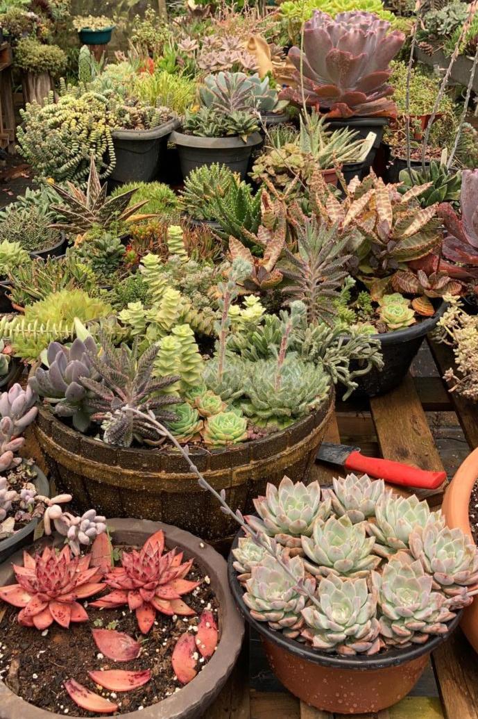 Mostra um jardim com várias espécies de suculentas.